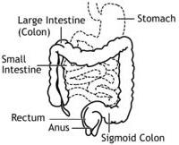 Diagram of colon